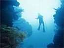 石垣島ダイビングポイント・大イソバナの根
