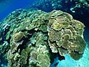 石垣島ダイビングポイント・三つ石